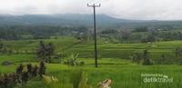 Mampir ke UNESCO World Heritage Jatiluwih Rice Terrace