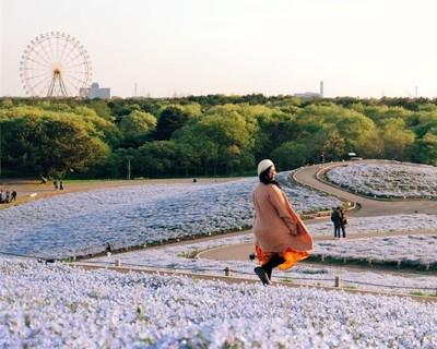 Bukit Penuh Bunga Instagenic di Jepang: Hitachi Seaside Park