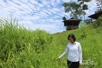 Pemandangan di sekitar Kaki Dian yang terletak di atas bukit dengan rumput yang menghijau.