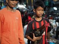Seorang anak sedang membawa ayam jagonya bersama bapaknya