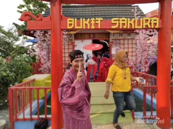 Bukit Sakura