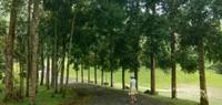 Jalan menuju ke kapel dengan pemandangan pepohonan yang cantik.
