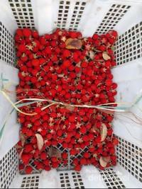 Petikk buah