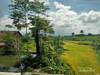 Perpaduan kolam, rumah dan sawah menyajikan pemandangan yang tak kalah cantik