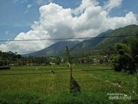 Sawah dengan latar belakang gunung