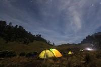 Suasana malam di savana yang sungguh menawan