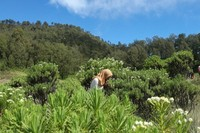 Bunga Edelweiss yang tersebar menambah keindahan savana Gunung Butak