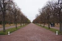 Deretan pepohonan yang telah berguguran di taman bawah istana Peterhof