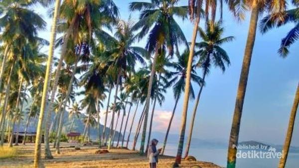 terlihat banyak pohon kelapa di niug tubele beach