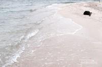 Pantai di Pulau Kelor