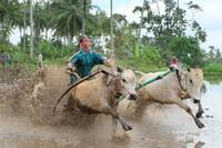 Pacu Jawi, Tanah Datar, Sumatera Barat