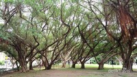 Kehadiran pohon-pohon raksasa mempercantik taman ini
