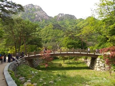 Pengalaman Pertama Wisata ke Negeri Ginseng