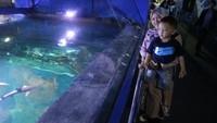 Kita juga bisa melihat ikan dari permukaan aquarium utama