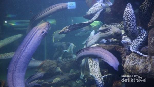 Di Sea World traveler bisa menjumpai aneka hewan laut, bahkan dari laut terdalam