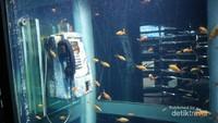 Selain itu ada juga aquarium unik berbentuk box telepon
