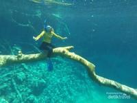 Foto underwater di pohon tumbangnya yang ikonik
