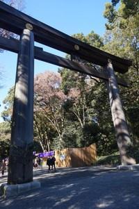 Torii raksasa yang menjadi simbol Kuil Meiji Jingu. Merupakan gerbang pintu masuk kuil