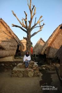 Pohon yang mempunyai sejarah tersendiri di desa Sade.