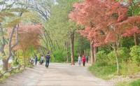 Jalan-jalan di Pulau Nami yang dikelilingi pepohonan yang cantik.