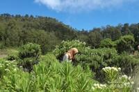 Kita juga dapat menjumpai banyak sekali sekumpulan bunga edelweiss disana
