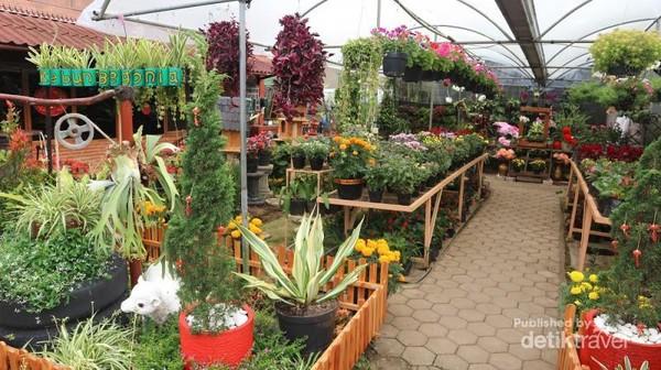 Sejukkan pikiran sejenak dengan keindahan bunga di Kebun Begonia
