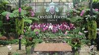 Orchid Forest memiliki berbagai koleksi anggrek cantik dan spot foto menarik