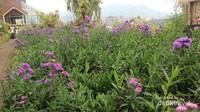 Uniknya bunga yang ada di rainbow garden ini edible atau dapat dikonsumsi