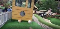Si kecil juga bisa bermain bersama kelinci yang imut di Rabbit Forest