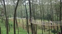 Jangan lewatkan keseruan menjelajahi hutan pinus dengan Wooden Bridge di Orchid Forest