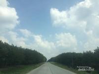 Hutan karet milik PT PTPN