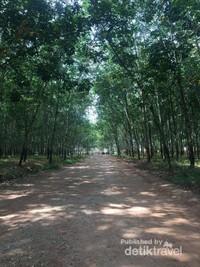 Hutan ini populer di kalangan anak muda
