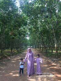 Siapa pun boleh datang dan menikmati keindahan hutan ini.