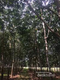 Jajaran pohon yang cantik dan teduh bikin penat hilang.