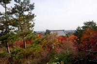 Hamparan pepohonan dengan warna-warni daunnya dilihat dari ketinggian