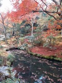 Kuil ini bisa dikunjungi setiap hari mulai pukul 8.30 pagi hingga 5 sore dengan kereta dari Kyoto station