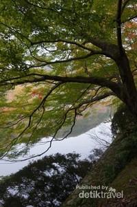 Ryoan-ji memiliki kolam yang cukup besar dengan pepohonan di sekelilingnya