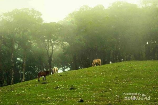 Fatullan di Kabupaten TTS memang sangat tepat dijuluki sebagai negri diatas awan.  saat kalian berada di desa ini, kalian serasa berada di negeri dongeng.