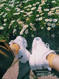 Saat kelelahan, kita bisa duduk-duduk di pinggir taman, sambil ditemani bunga-bunga cantik yang banyak tumbuh di sekitar taman.