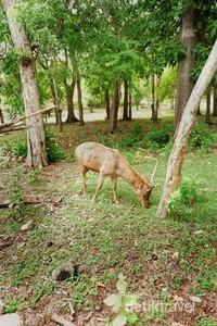 Selain komodo, juga terdapat beberapa hewan mamalia seperti rusa