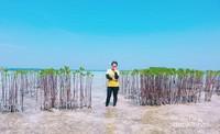 Bakau-bakau muda di Pulau Semak Daun.