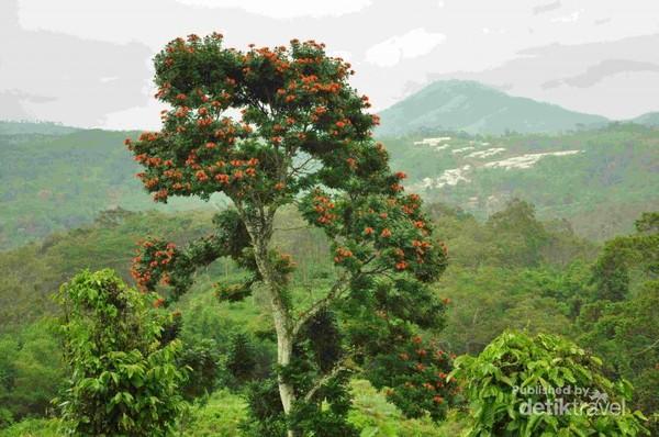 Panorama alam Gunung Padang