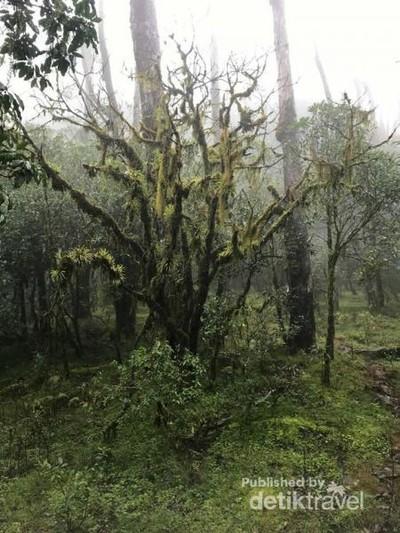 Hutan Bonsai yang Unik di Timur Indonesia