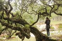 banyak lumut dan tanaman liar yang hidup di antara batang-batang pohon bonsai ini.