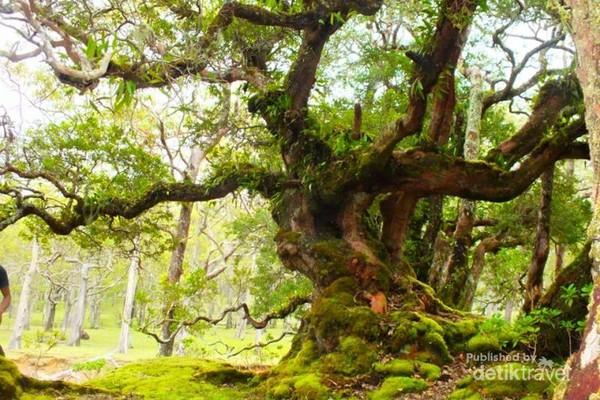 pohon-pohon bonsai ditempat ini berumur hampir ratusan tahun. (ar meel)