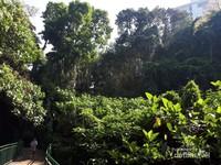 Suasana Hutan Babakan Siliwangi yang dipenuhi pohon-pohon besar dan sesekali terlihat bangunan tinggi di sekitarnya