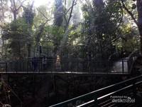 Lintasan Forestwalk yang berkelok dan menanjak serat menurun. Jika beruntung pengunjung mungkin dapat melihat tupai.