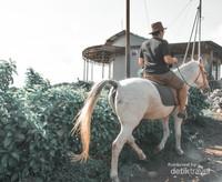Rental Kuda