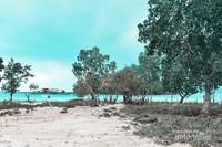 Pantai Teluk Damai
