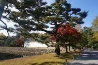 Nijo Castle dibuka tiap hari dengan tiket masuk 600 yen (tambah 400 jika ingin masuk Ninomaru Palace).